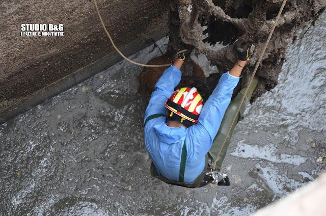Αργολίδα: Επιχείρηση της πυροσβεστικής για σκυλάκι που έπεσε σε φρεάτιο του βιολογικού