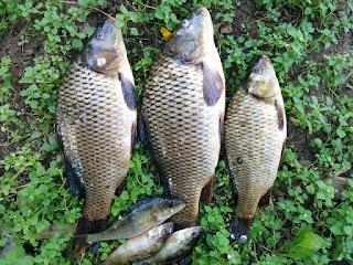 mancing ikan tombro sungai