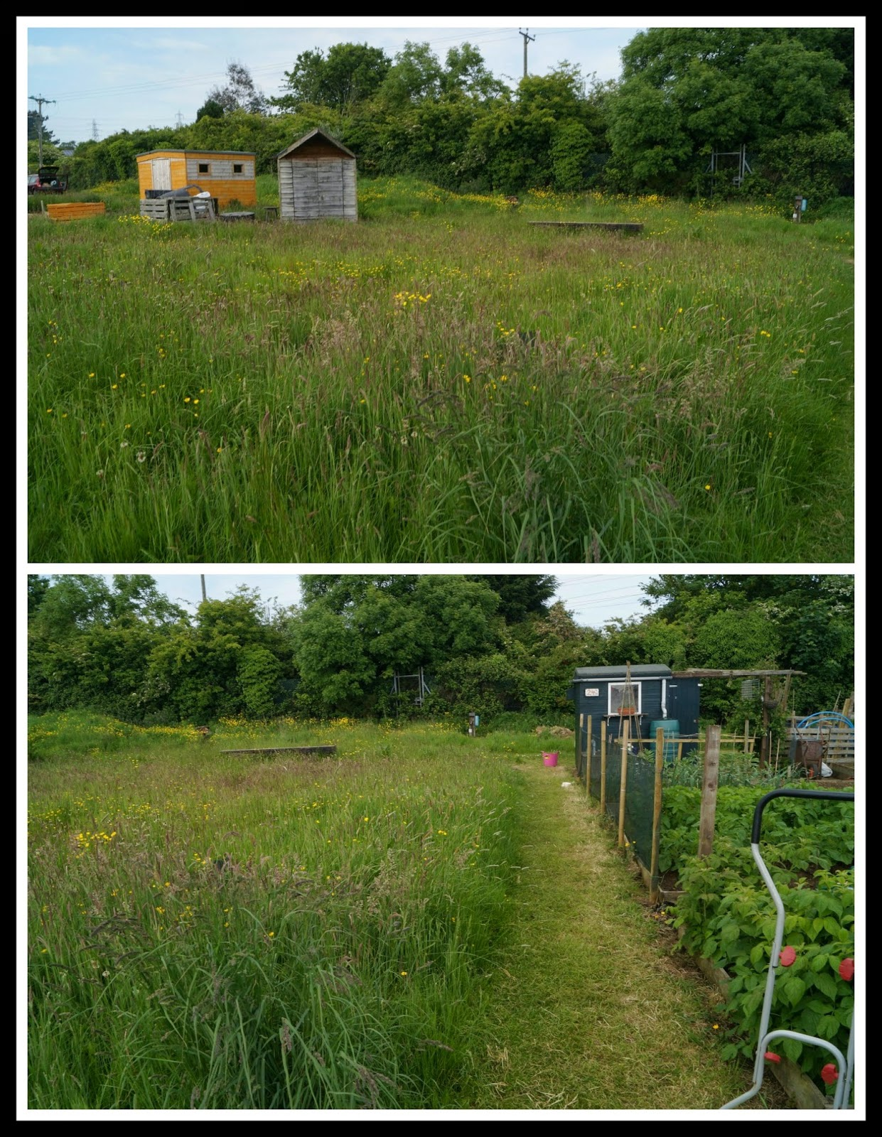 Transformation of the 24a path - 'growourown.blogspot.com' ~ an allotment blog