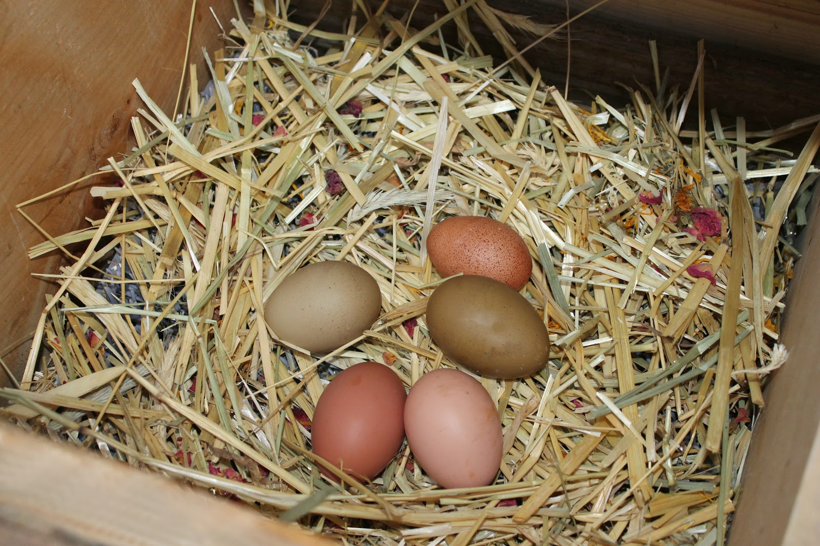 The Chicken Chick 174 Frozen Eggs The Nest Box Cozy