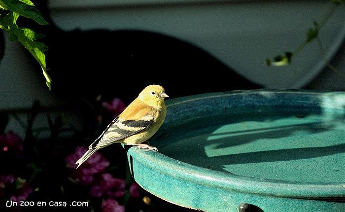El herrerillo comederos para aves for Bebederos para aves jardin