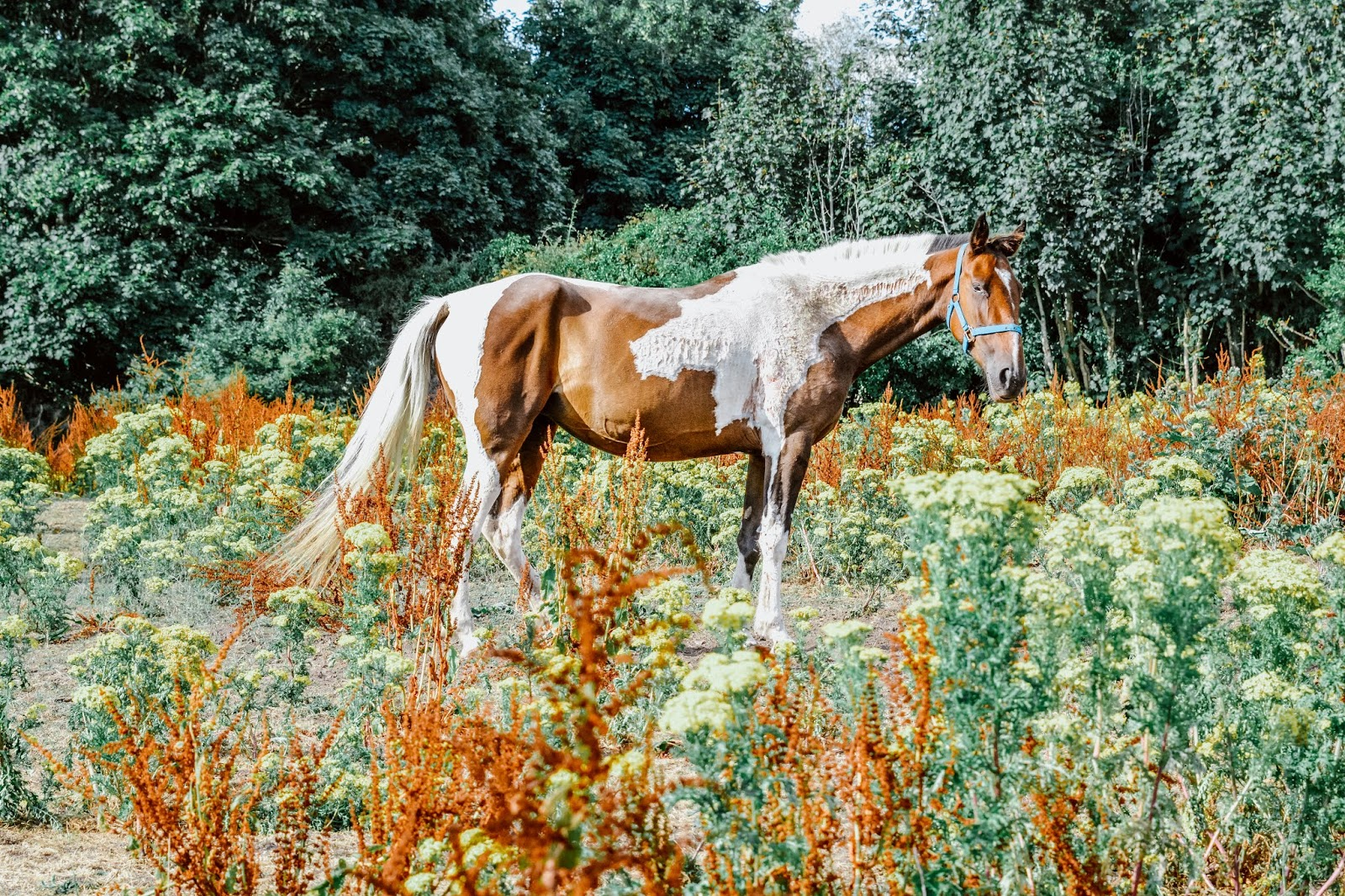Askeaton Friary Horse
