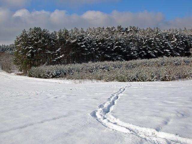 ślady, tropy, śnieg, las, zima