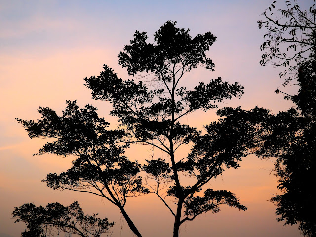 Sunset tree on The Peak, Hong Kong