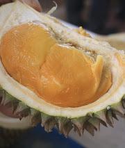 bibit durian duri hitam,bibit kualitas unggul,jual bibit durian duri hitam,rasa buah legit manis