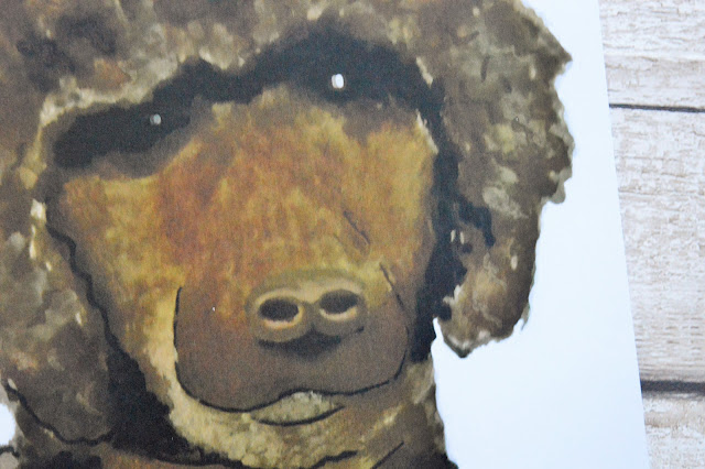 A close up of the print of Ziggy's head.