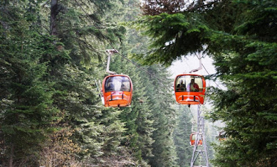 Orange gondolas among the conifers