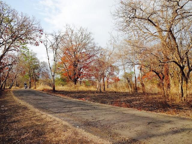 Taman nasional Baluran - foto - Very Barus
