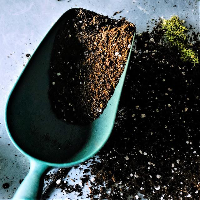 Start with good potting soil