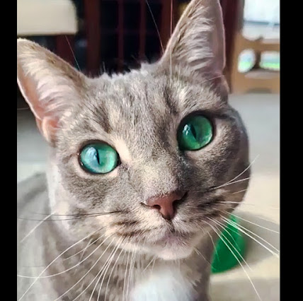Tabby cat with bright emerald eyes