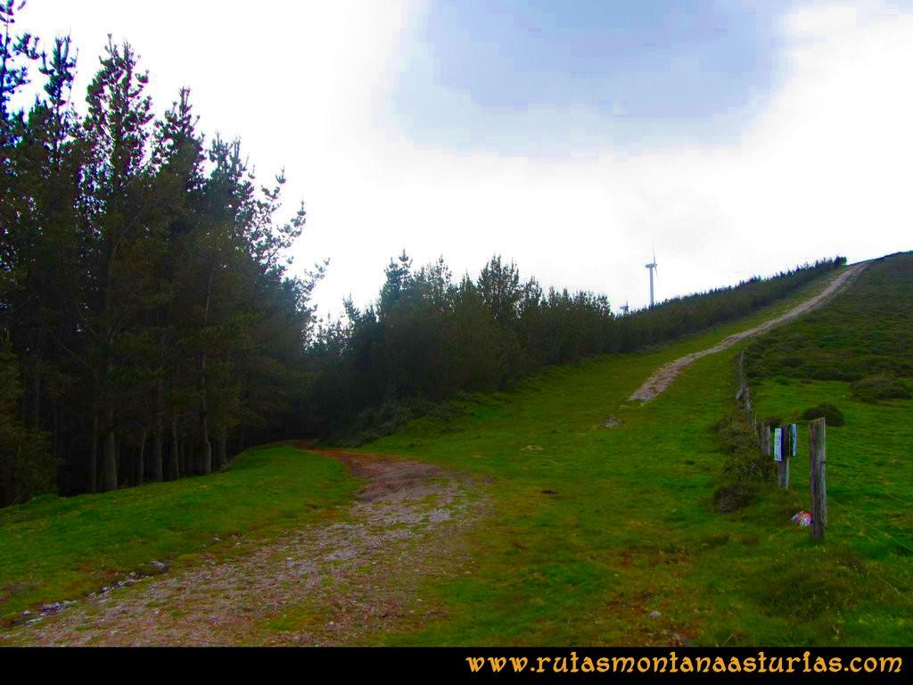 Ruta Llan de Cubel y Cueto: Entrando en el pinar