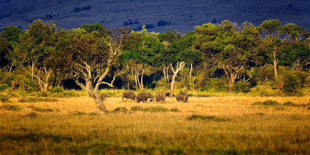Elefanten Herde in der Masai Mara, Kenia