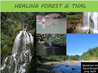Healing Forest, Alternatif Wisata Baru Ditawarkan Taman Nasional Aketajawe Lolobata di Era New Normal