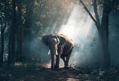 gajah hewan herbivora