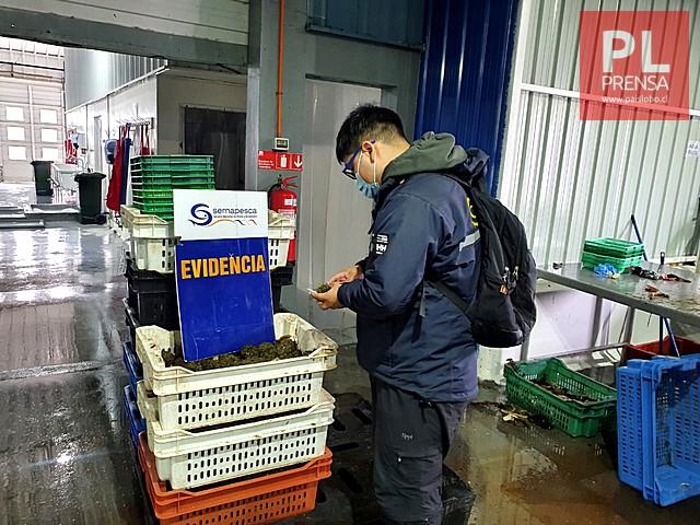 Sernapesca detecta más de 9 toneladas de recursos ilegales