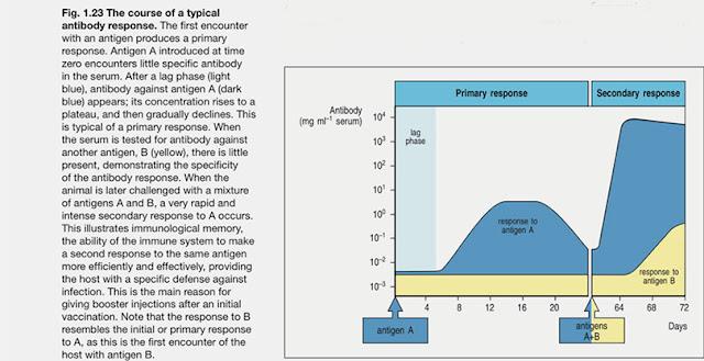 "Typical Antibody Response (Source: K. Murphy, ""Janeway's ImmunoBiology"")"