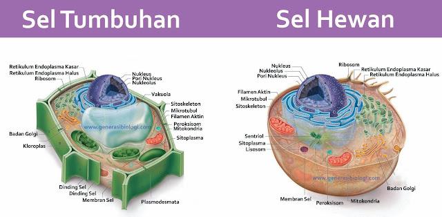 perbedaan sel hewan dan sel tumbuhan brainly, perbedaan sel hewan dan sel tumbuhan pdf, perbedaan sel hewan dan sel tumbuhan dalam bentuk tabel, perbedaan sel hewan dan sel tumbuhan yang benar adalah, perbedaan sel hewan dan sel tumbuhan beserta penjelasannya, perbedaan sel hewan dan sel tumbuhan dalam bentuk tabel beserta fungsinya, perbedaan sel hewan dan sel tumbuhan beserta gambar, perbedaan sel hewan dan sel tumbuhan dalam tabel, perbedaan sel hewan dan sel tumbuhan dan gambarnya, perbedaan sel hewan dan sel tumbuhan ppt, perbedaan sel hewan dan sel tumbuhan beserta keterangannya, perbedaan sel hewan dan sel tumbuhan sentriol, perbedaan sel hewan dan sel tumbuhan dapat dilihat dari ada tidaknya, perbedaan sel hewan dan sel tumbuhan beserta gambarnya dan fungsinya, perbedaan sel hewan dan sel tumbuhan berdasarkan organel penyusunnya, perbedaan sel hewan dan sel tumbuhan dan penjelasannya, perbedaan sel hewan dan sel tumbuhan adalah, perbedaan vakuola sel hewan dan sel tumbuhan adalah, perbedaan sel hewan dan sel tumbuhan beserta alasannya, perbedaan sel hewan dan sel tumbuhan yahoo answer, salah satu perbedaan sel hewan dan sel tumbuhan adalah, perbedaan sel hewan dan sel tumbuhan menurut para ahli, perbedaan antara sel hewan dan sel tumbuhan dalam bentuk tabel, apakah perbedaan sel hewan dan sel tumbuhan, perbedaan antara sel hewan dan sel tumbuhan beserta fungsinya, perbedaan antara sel hewan dan sel tumbuhan beserta gambarnya, perbedaan antara sel hewan dan sel tumbuhan berdasarkan organel yang dimiliki, perbedaan antara sel hewan dan sel tumbuhan berdasarkan organel selnya, apa perbedaan sel hewan dan sel tumbuhan jelaskan, perbedaan sel hewan dan sel tumbuhan dapat diketahui dari ada tidaknya, perbedaan antara sel hewan dan sel tumbuhan berdasarkan organel, perbedaan sel hewan dan sel tumbuhan berdasarkan organel selnya, perbedaan sel hewan dan sel tumbuhan berdasarkan hasil pengamatan, perbedaan sel hewan dan sel tumbuhan berdasarkan fisiologinya, perbedaa