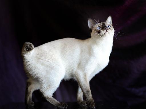 اذكي انواع قطط