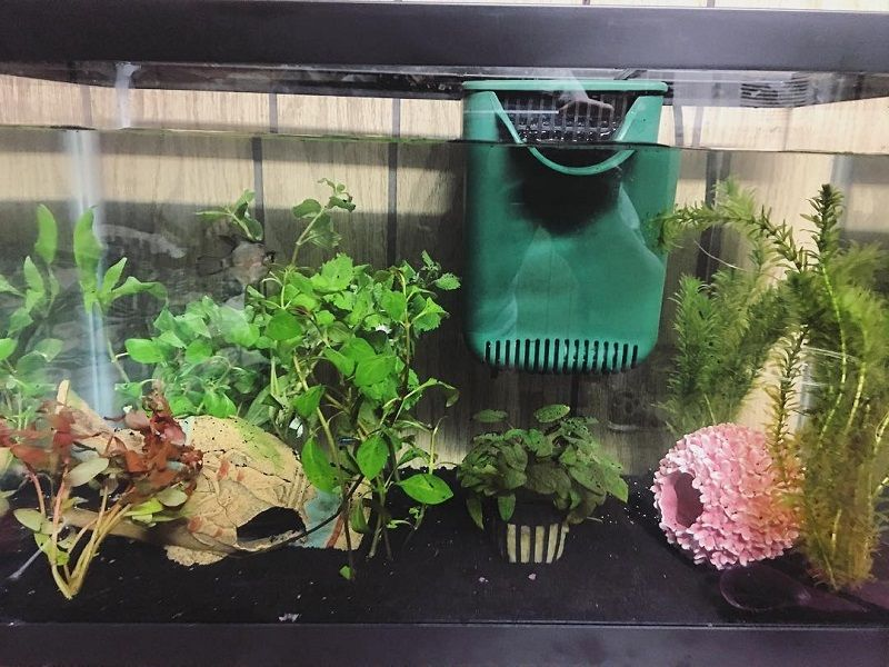 The Rise of Betta Fish Plants Petco