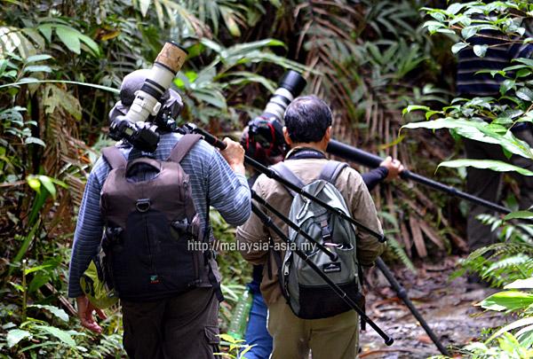 Sabah Borneo Rainforest Birding