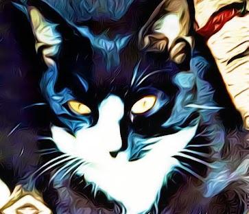 Tuxedo cat art