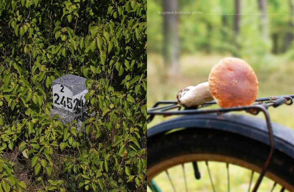 Warmia na rowerze, grzybobranie, Rezerwat Las Warmiński