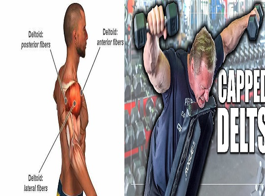 The Only 3 Exercises You Need To Do To Develop Monstrous Delts - bodybuilding110