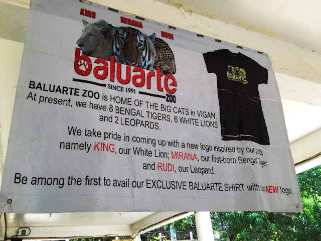Baluarte Ilocos is home to 8 Bengal Tigers, 6 White Lions and 2 Leopards