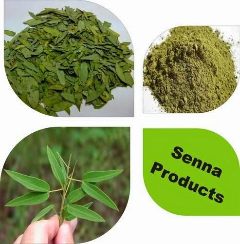 Herba Daun Cina Maki / Senna Leaf