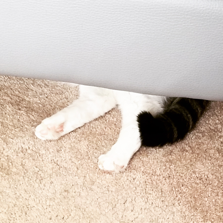 image of Olivia the White Farm Cat's back paws and tail peeking out from beneath the sofa
