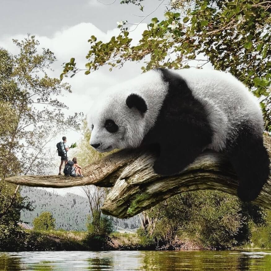 06-A-chat-with-our-panda-friend-Marcio-Sa-www-designstack-co