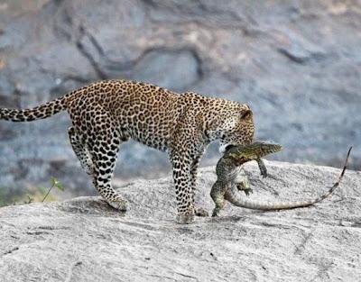 avını yakalamış leo