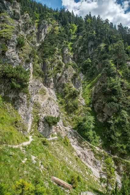 Wanderung zur Stepbergalm  Wandern Garmisch-Partenkirchen  Stepbergtour Alpentestival-Garmisch-Partenkirchen 08