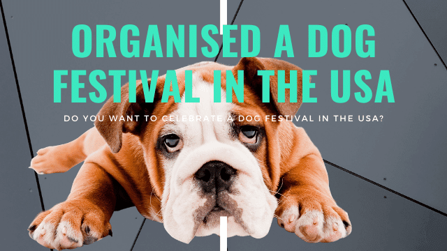 Dog Festival In The USA