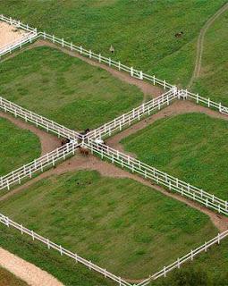 Le cheval est un être sociable, a besoin de vivre avec ses congénères. Un cheval a un instinct grégaire très fort.