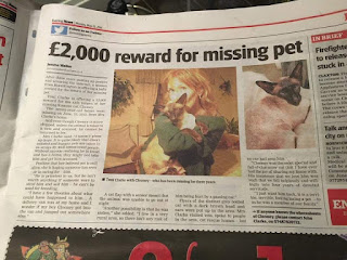 newspaper image for £2000 reward for missing pet Clooney