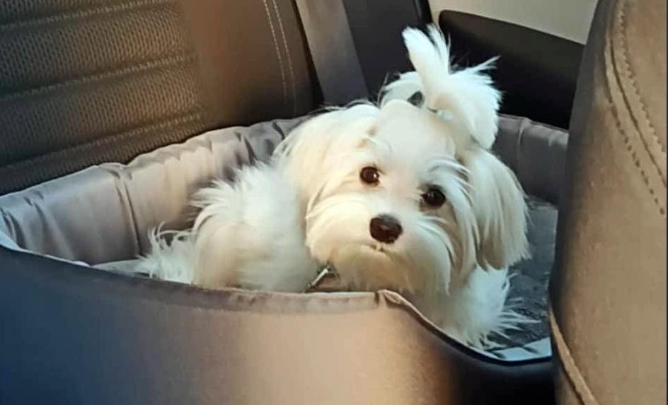 Jak przeżyć podróż z psem i nie zwariować?