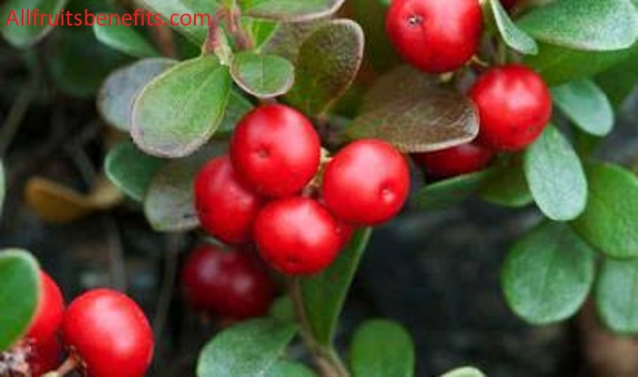 bearberry benefits,uva ursi benefits for skin,bearberry benefits for skin,bearberry extract benefits in skin care,bearberry extract skin benefits,bearberry leaves benefits,bearberry extract benefits,bearberry extract side effects,bearberry extract side effects skin,bearberry tea benefits,arctostaphylos uva ursi leaf extract skin care