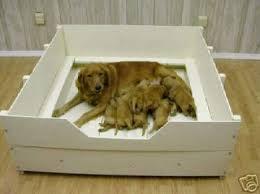 caixa de parto para cães