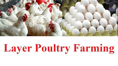 increase egg production in poultry