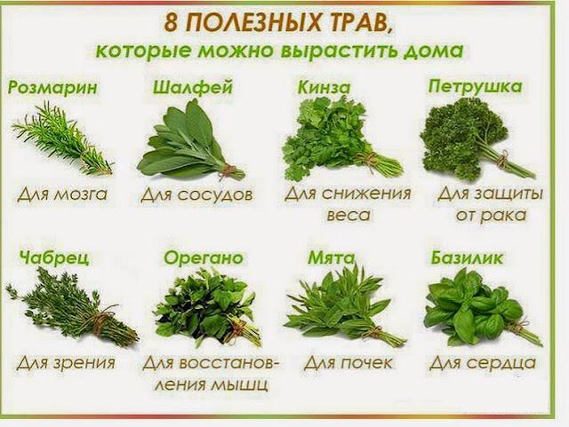 полезные травы которые можно вырастить дома