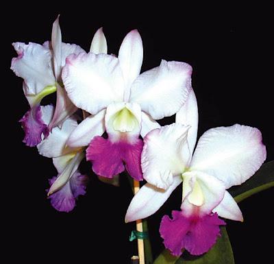 imagenes de flores exoticas