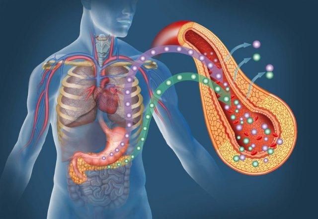 Когда инсулинорезистентность бывает полезна: от иммунитета до крепкого сна.