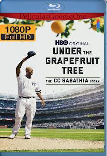 Under The Grapefruit Tree: The CC Sabathia Story (2020) AMZN [1080p Web-DL] [Latino-Inglés] [LaPipiotaHD]