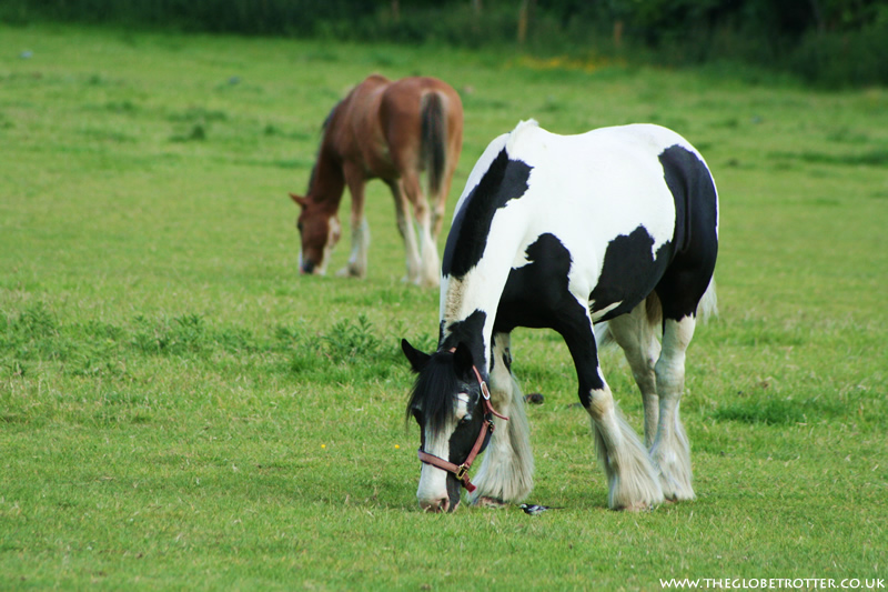 Horses grazing in Lee Valley Park