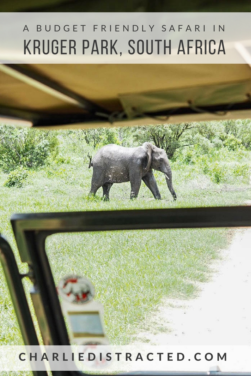 An Incredible and Budget Friendly Safari in Kruger Park, South Africa