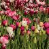 Blumenzwiebeln pflanzen: Auf die harte Tour