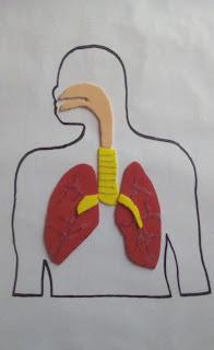 como hacer maqueta del sistema respiratorio