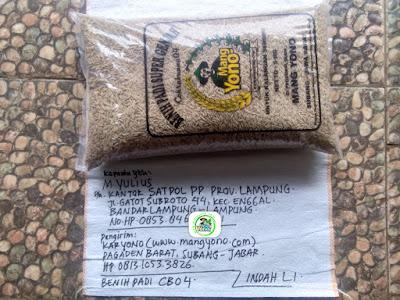 Benih Padi Pesanan   M. YULIUS Bandar Lampung. Lampung.   (Sebelum di Packing).