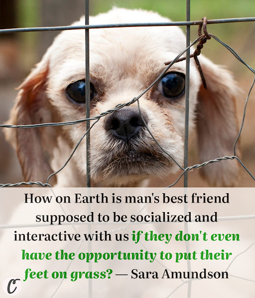 How on Earth is man's best friend supposed to be socialized and interactive with us if they don't even have the opportunity to put their feet on grass? — Sara Amundson, president of the Humane Society Legislative Fund